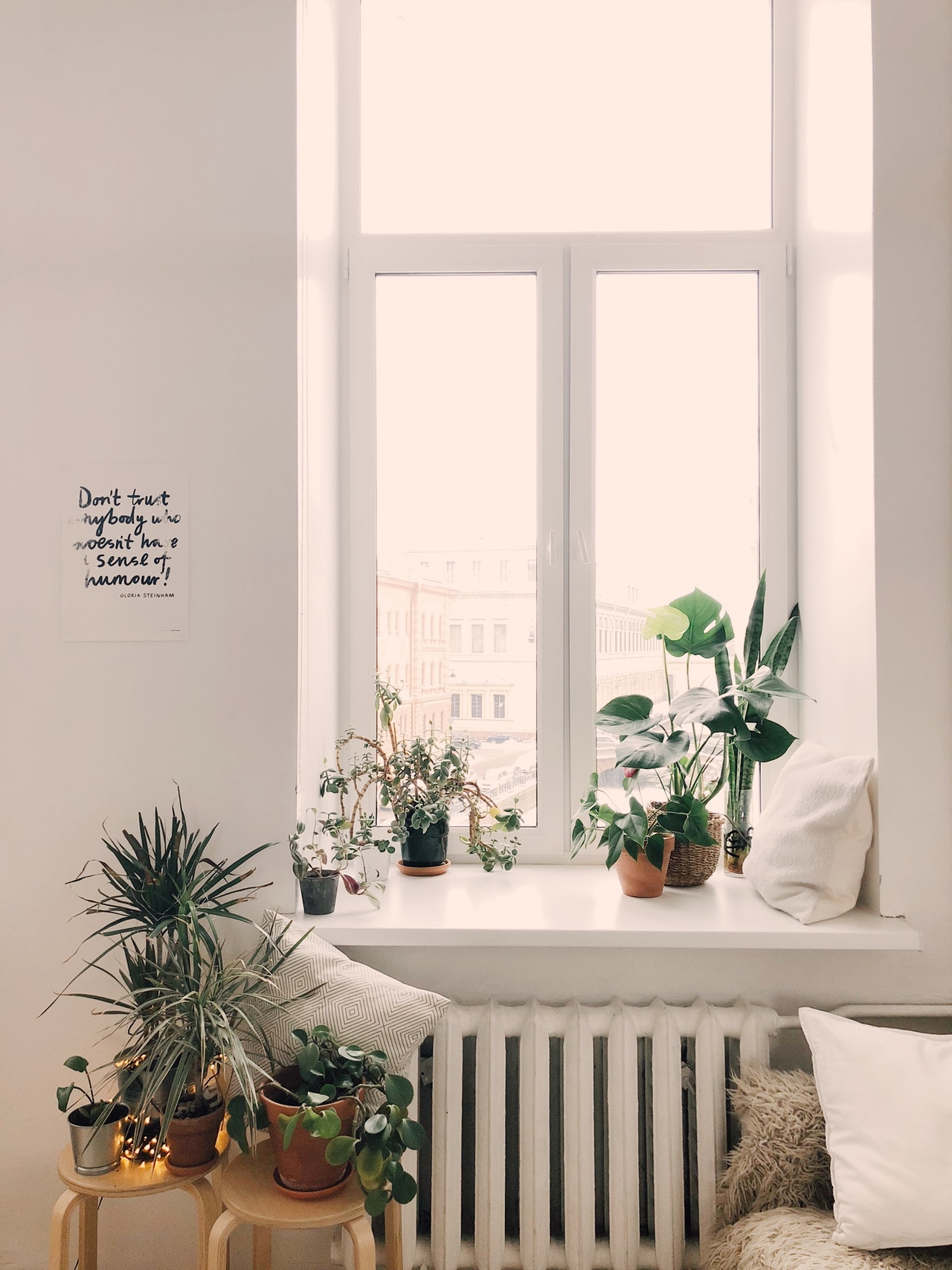 Tips on how to take care of your indoor plants